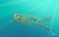 turtle_persp_lukasl_hmc