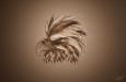 eagle_qs_lukasl_01